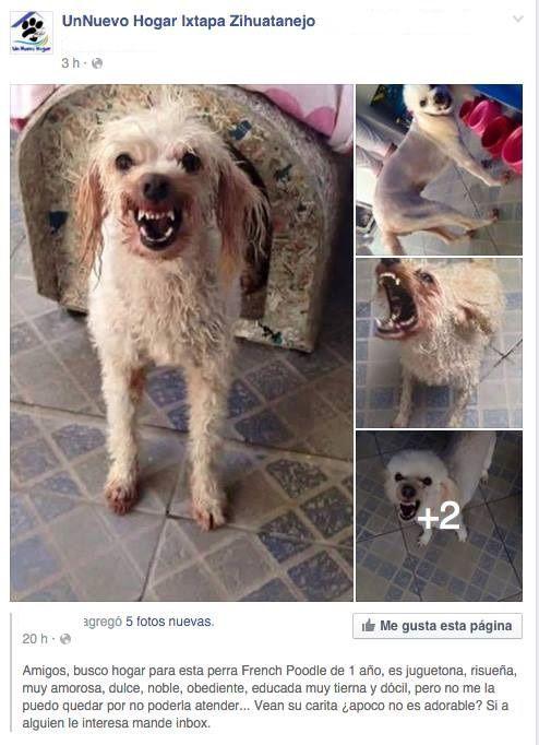 Marcianadas_210_1812150933 (209)