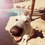 Técnica promete acabar con la agonía de los perros ante las explosiones