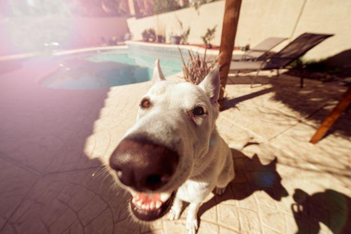 perro nariz