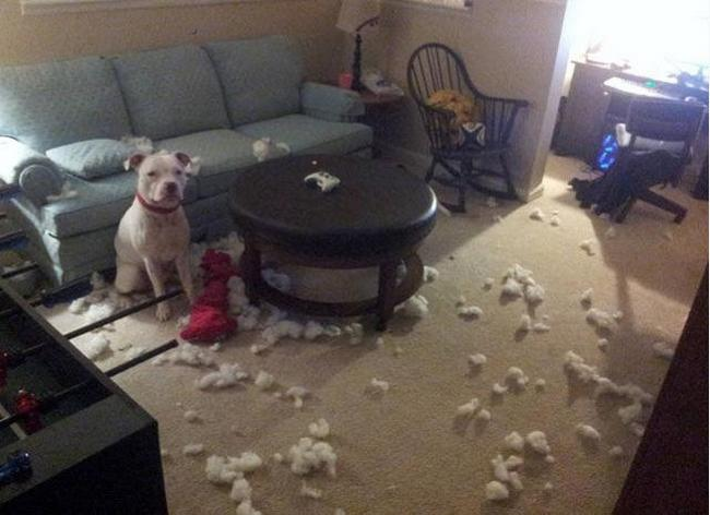 perros vs navidad (1)