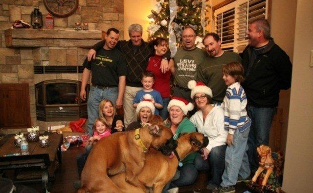 perros vs navidad (12)