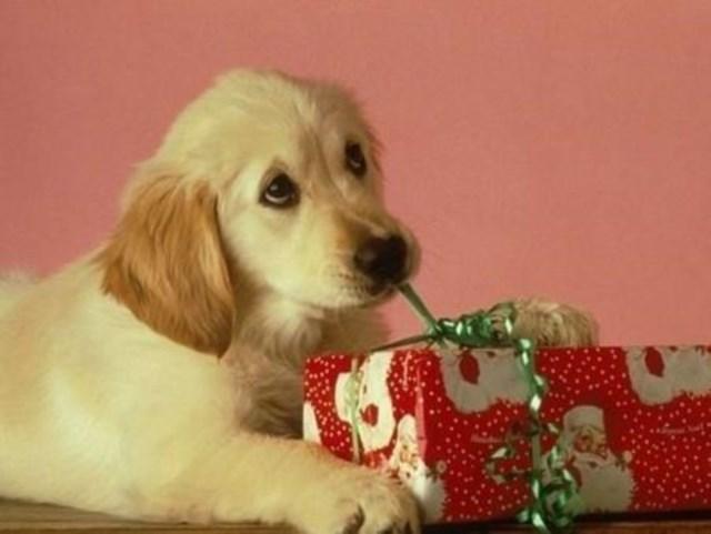 perros vs navidad (13)