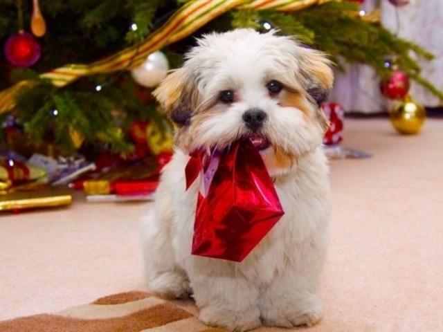 perros vs navidad (14)