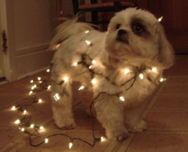 perros vs navidad (15)