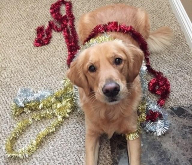 perros vs navidad (18)