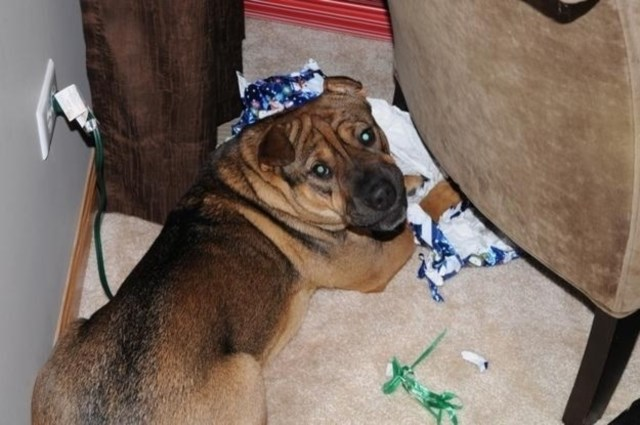 perros vs navidad (19)