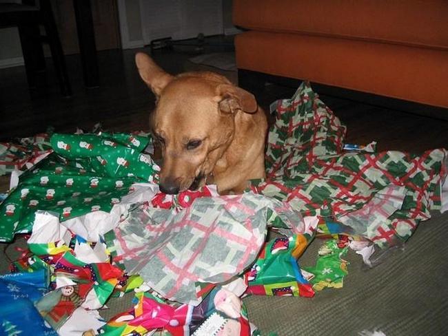 perros vs navidad (2)