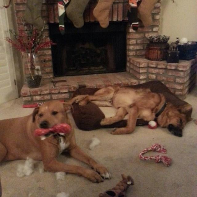 perros vs navidad (20)