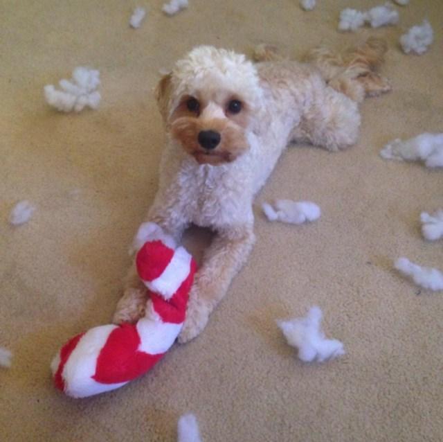 perros vs navidad (21)