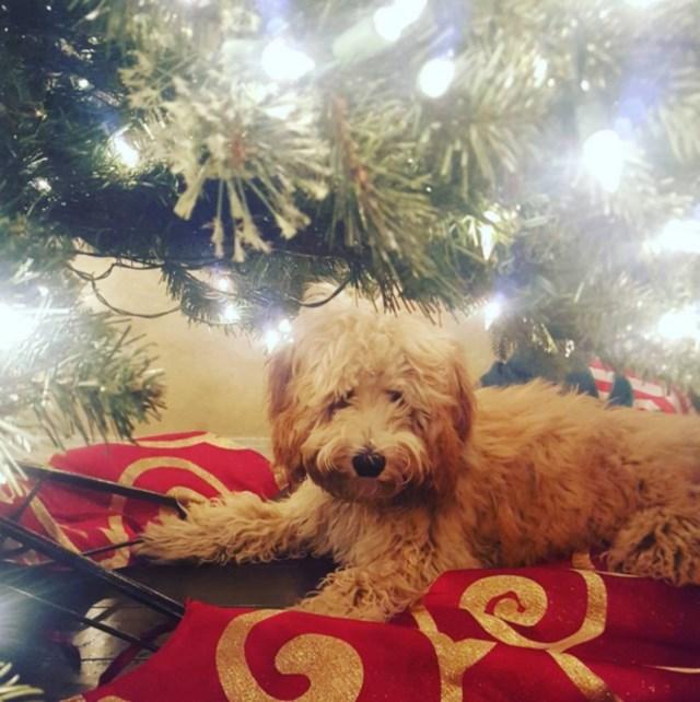 perros vs navidad (22)