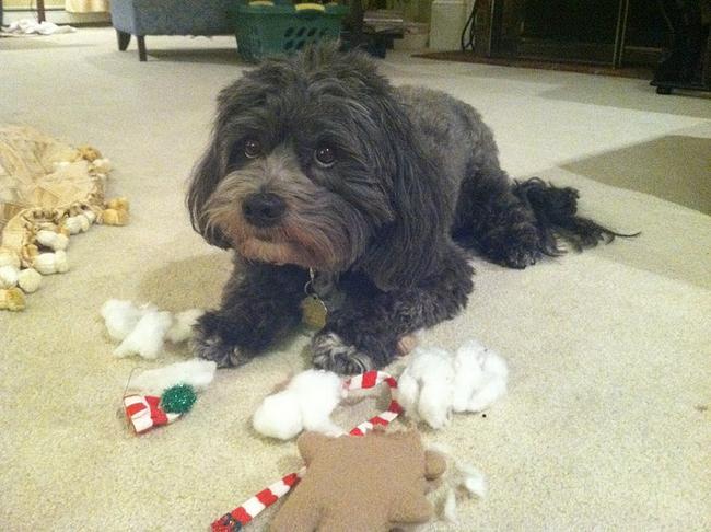 perros vs navidad (25)