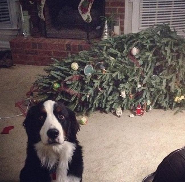 perros vs navidad (3)