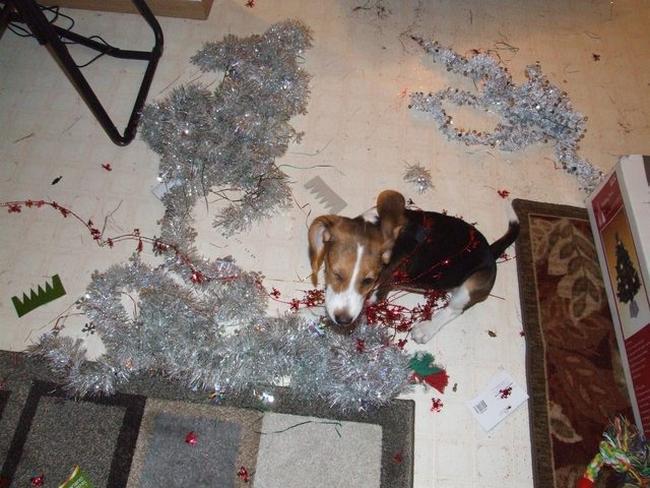 perros vs navidad (5)