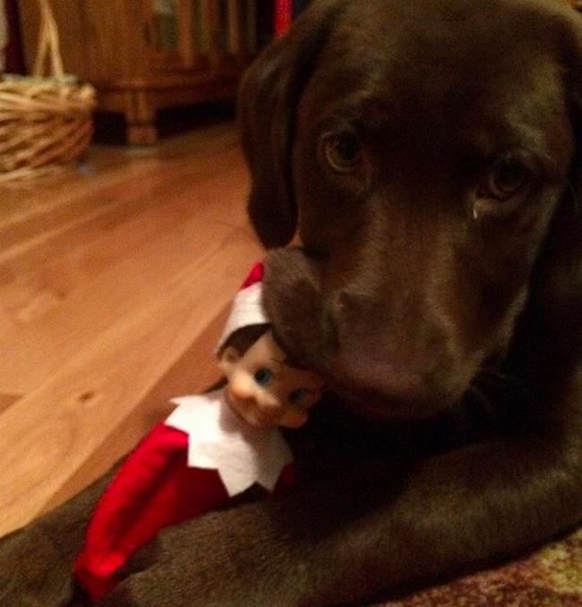 perros vs navidad (7)