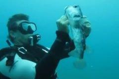 Video: Buzo desengancha a peligroso pez erizo