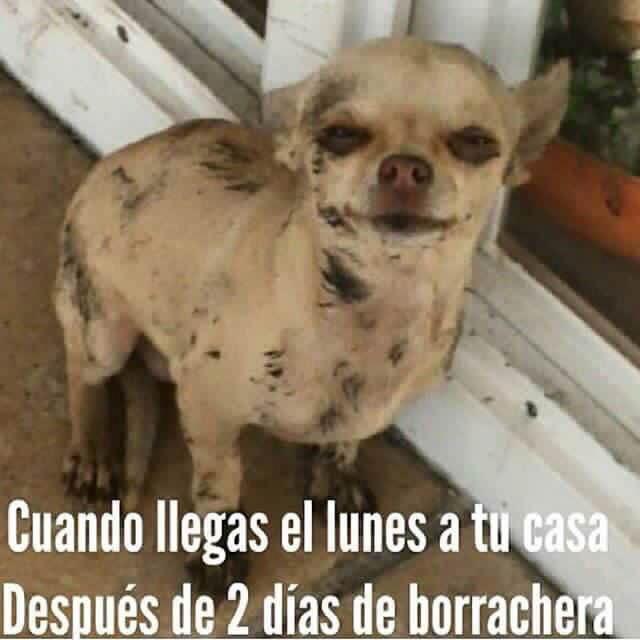 Marcianadas_2014_15011226 (183)