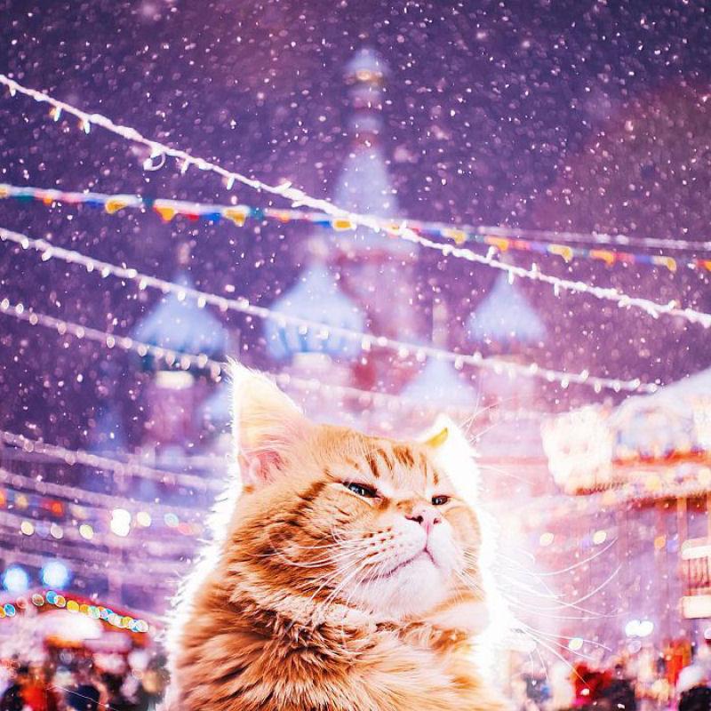 celebracion_Navidad_Rusia_Moscu (12)