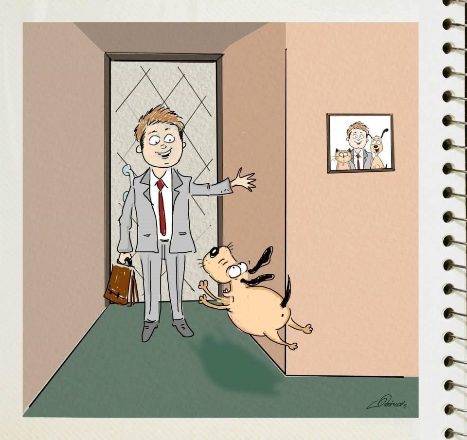 diferencias perros y gatos (10)