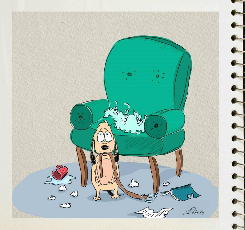 diferencias perros y gatos (3)