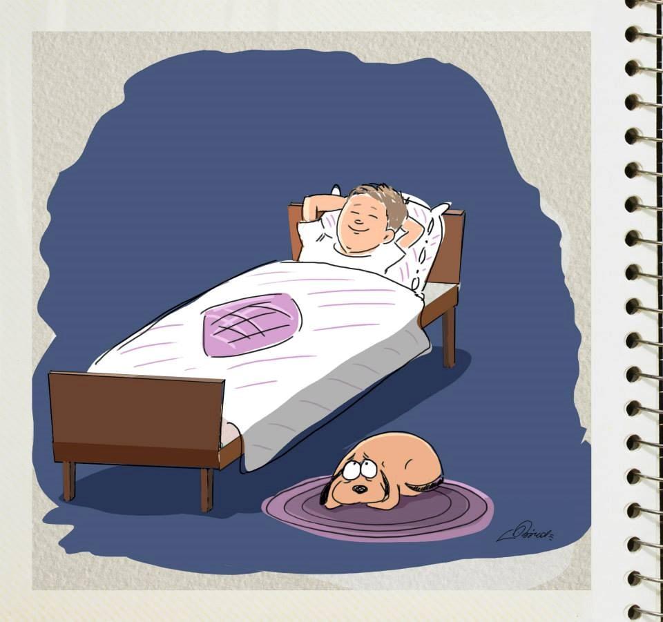 diferencias perros y gatos (5)