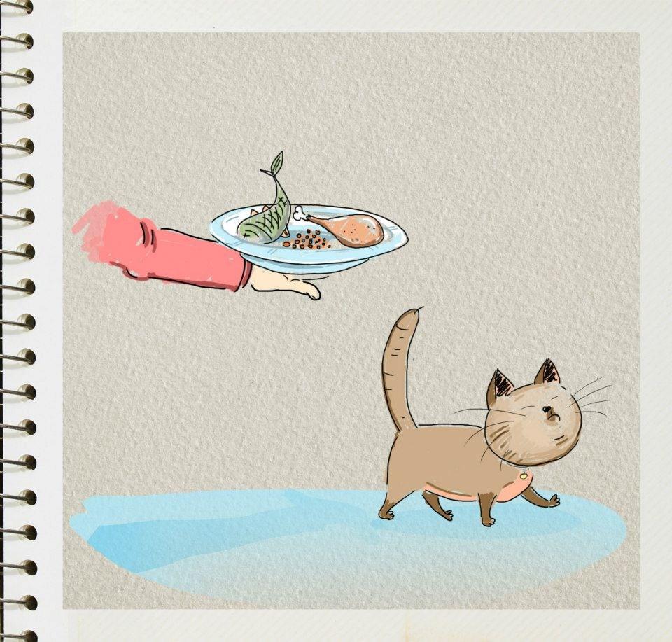 diferencias perros y gatos (8)