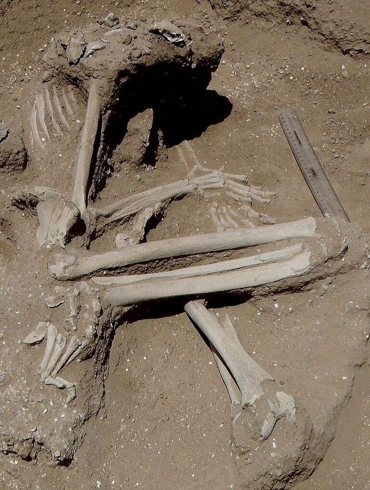 masacre nataruk (1)