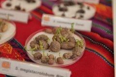 La NASA hace pruebas para sembrar papas en Marte