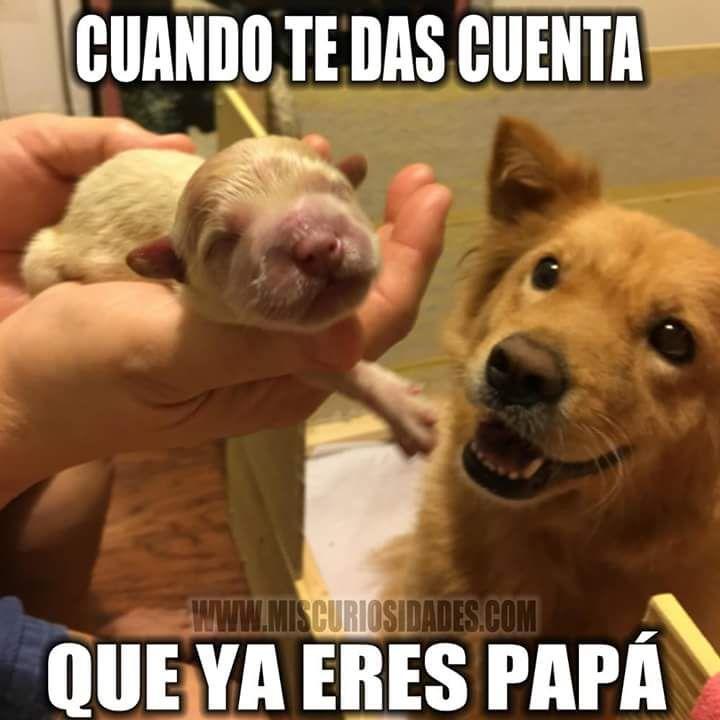 Marcianadas_117_0502160858 (13)