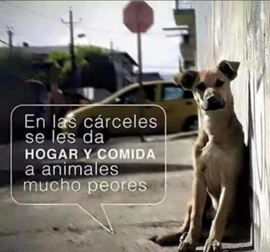 Marcianadas_218_0108120216 (226)
