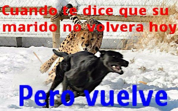 Marcianadas_220_2502161033 (16)