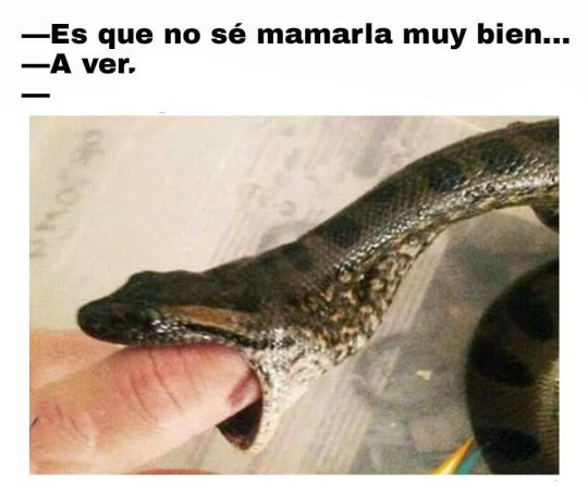 Marcianadas_220_2502161033 (54)