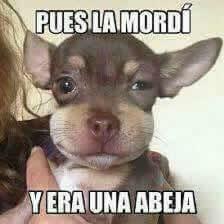 Marcianadas_220_2502161033 (80)