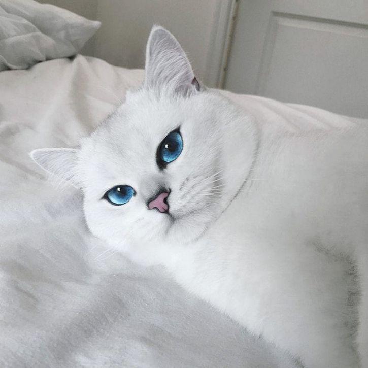 coby gato ojos azules (12)