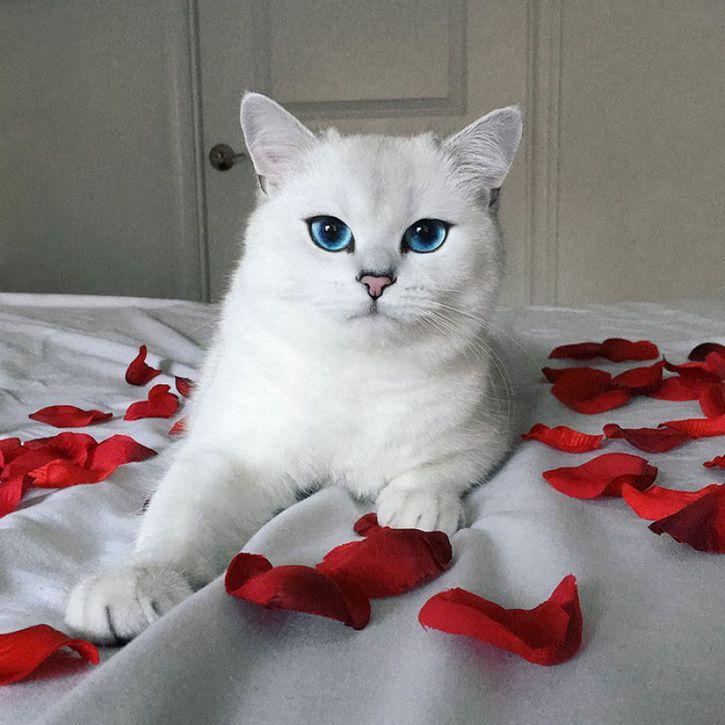 coby gato ojos azules (13)