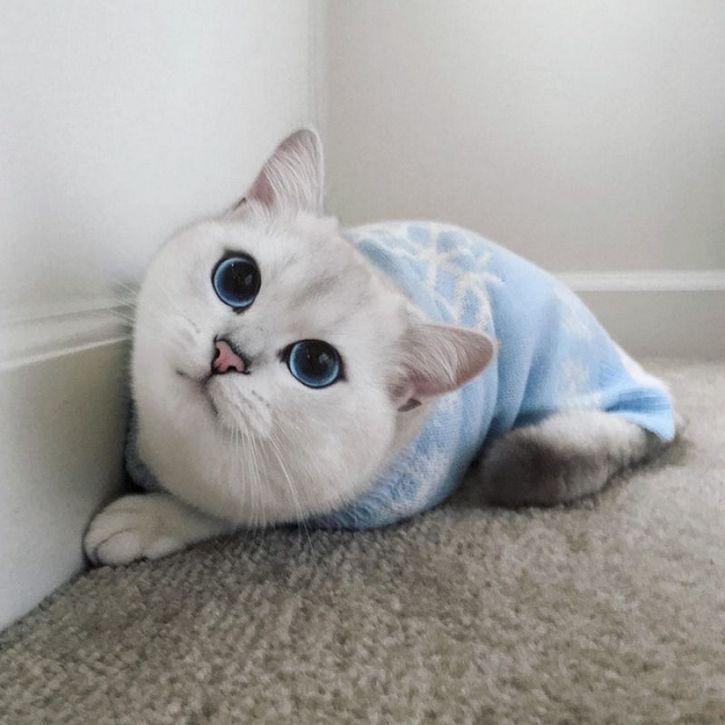 coby gato ojos azules (14)