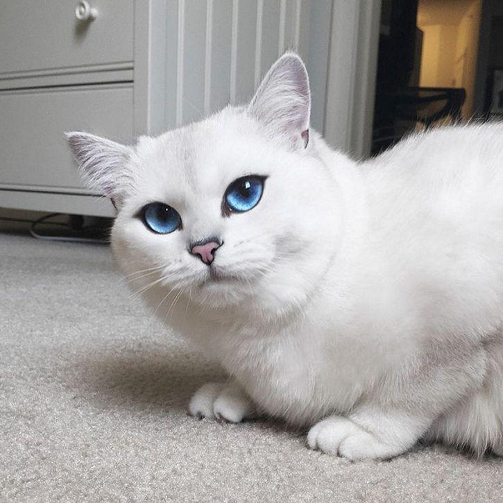 coby gato ojos azules (16)
