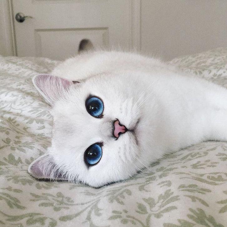 coby gato ojos azules (17)