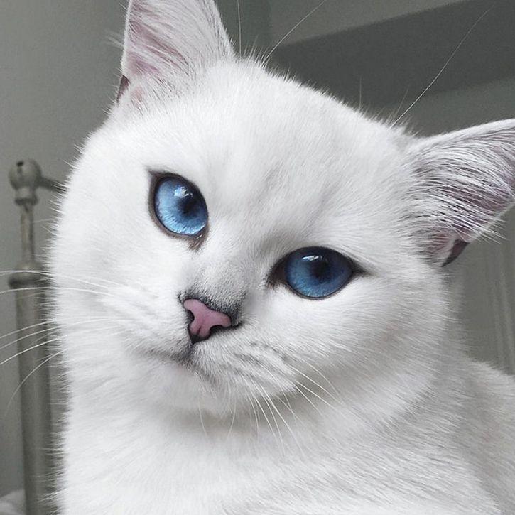 coby gato ojos azules (3)