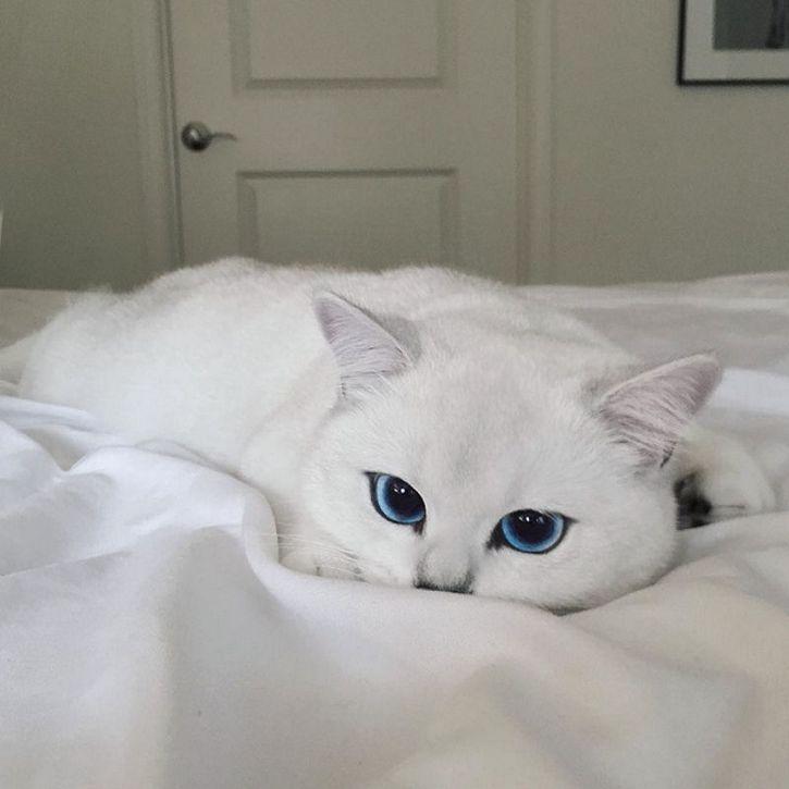 coby gato ojos azules (4)