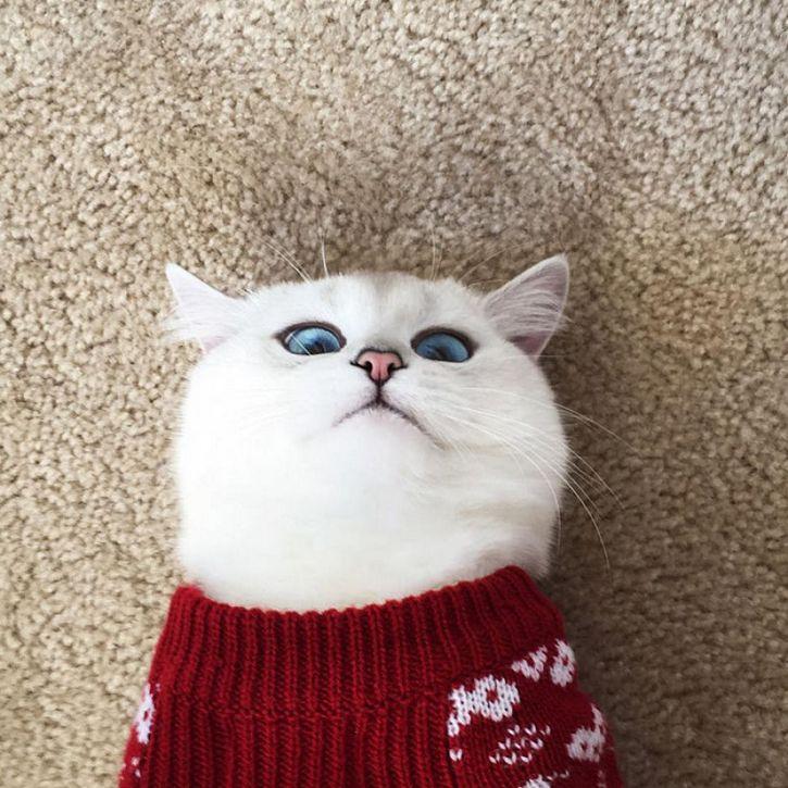 coby gato ojos azules (5)