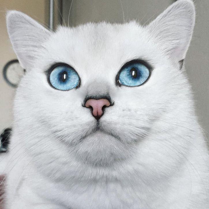 coby gato ojos azules (6)