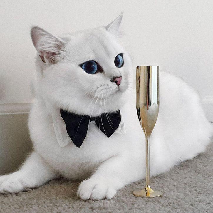 coby gato ojos azules (7)