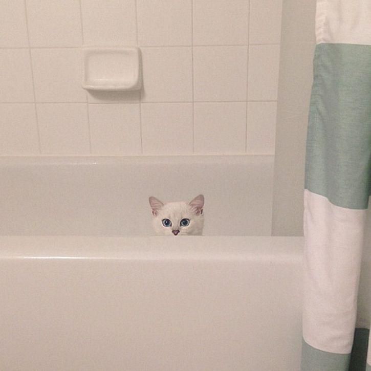 coby gato ojos azules (8)