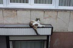 Síndrome de gran altura felina