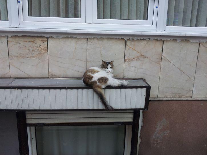 gato en la cornisa