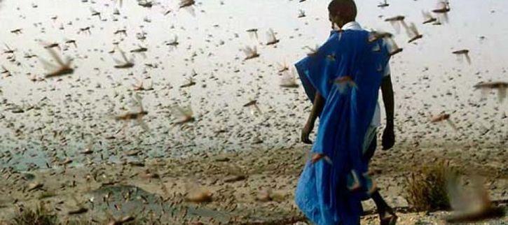 plaga de langostas en egipto