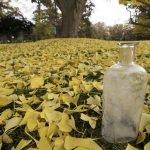 Las semillas de William Beal, uno de los experimentos más antiguos