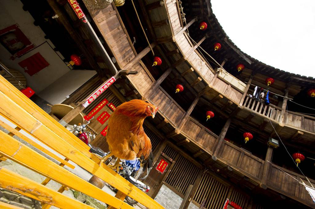 tulous Fujian china 18