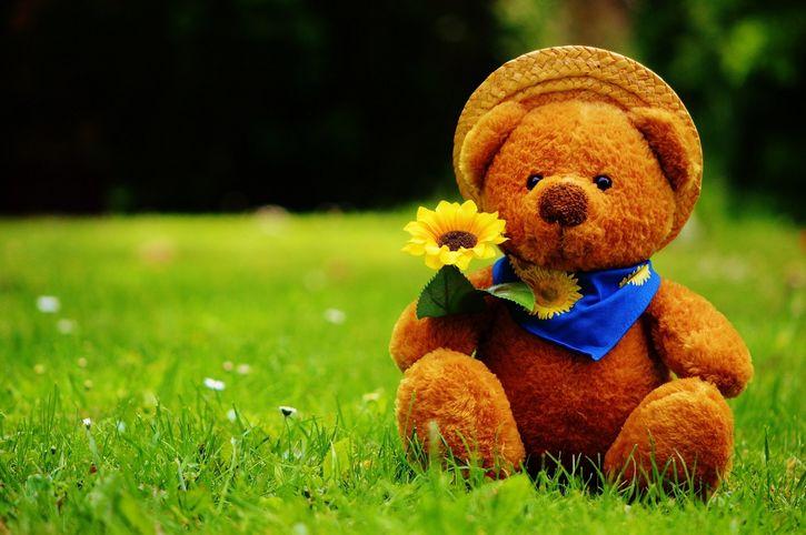 oso de peluche teddy bear