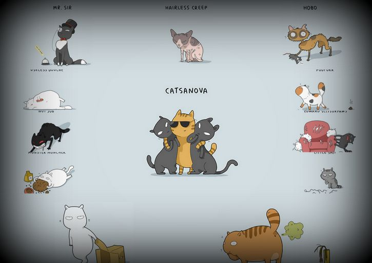 tipos de gato
